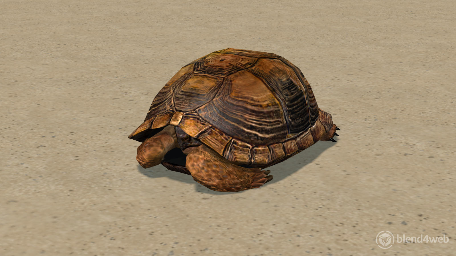 Tortoise preview