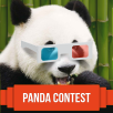 Panda Contest: Results