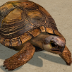 Creating an Animated Tortoise Part 2